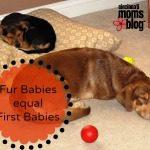 Fur Babies = First Babies