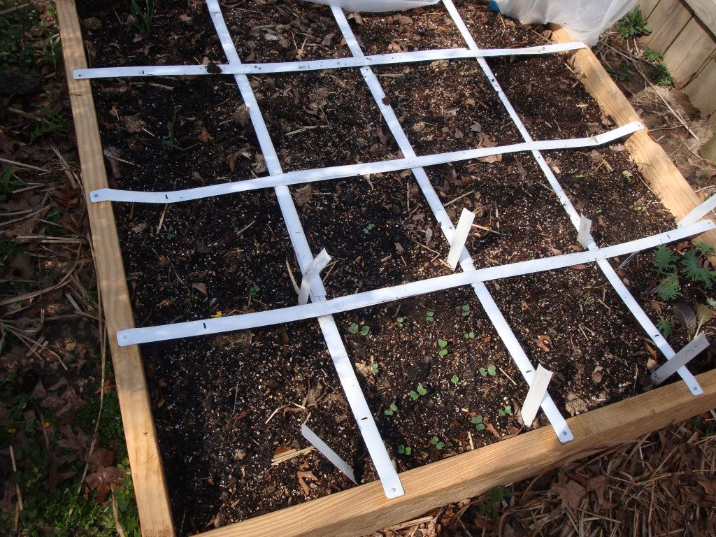 Finished raised bed, divided into one foot spaces for growing a variety of vegetables in a small space.