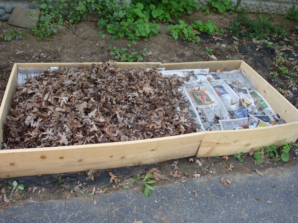 The start of a raised bed lasagna garden-a simple wooden box, several layers of dampened newspapers, leaves, grass clippings, and compost.