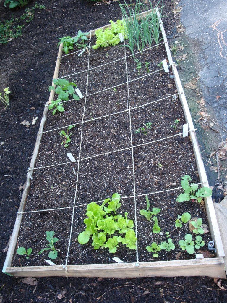 Cool weather-loving spring vegetables-lettuce, kale, parsley, green onions.