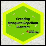 Creating a Mosquito Repellant Planter