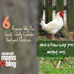 Six Reasons Why You Should Totally Consider Backyard Chickens… and a Few Why You Might Not