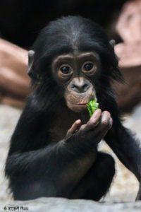 http://cincinnatizoo.org/events/zoo-babies/