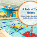 A Tale of Two Fishes: A Look Under the Surface at Goldfish Swim School
