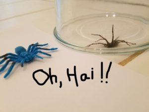 5 Easy Steps to Dispatching A Spider Without Flipping Out
