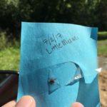 We Found a Tick!