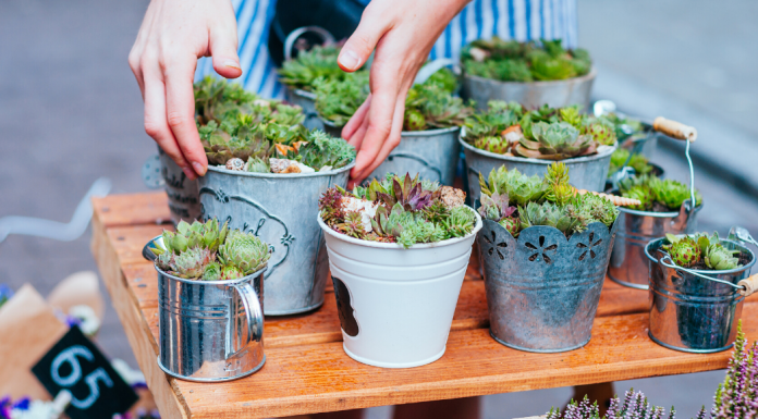 March 2020 Events Featured Image with Succulents
