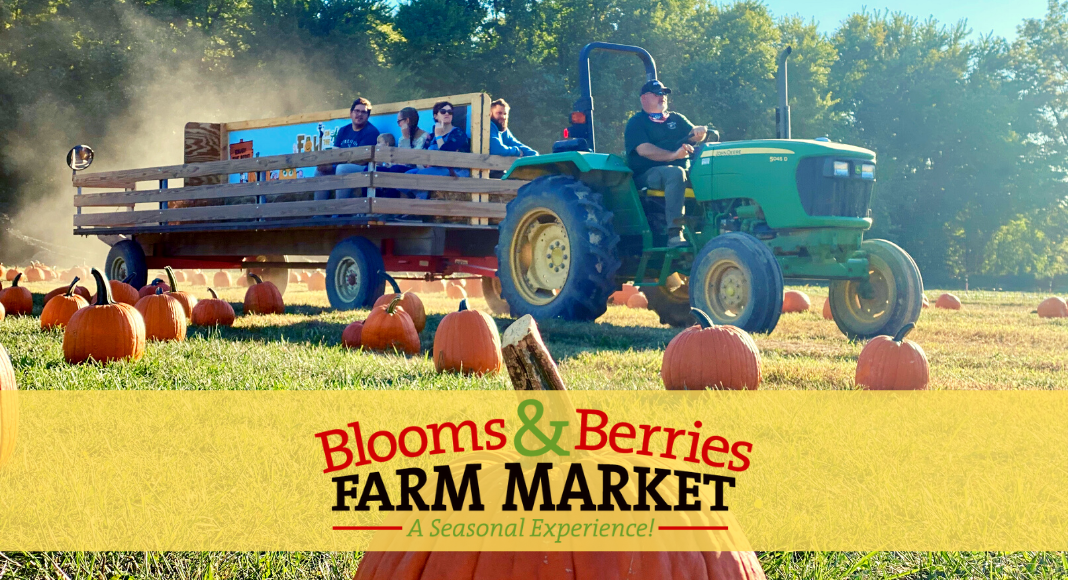 blooms and berries farm market fall on the farm